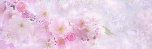 [Titre du site] PIXABAY_SAKURA_cherry-blossom-3054799_1280x416