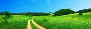 [Titre du site] PIXABAY_SAKURA_footpath-691021_1280x416
