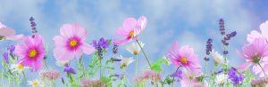 [Titre du site] PIXABAY_SAKURA_wild-flowers-571940_1280x416