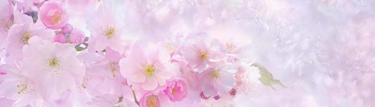 Clos Sakura